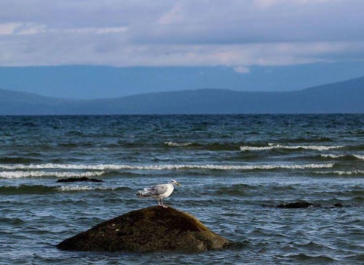 Birds Ocean Landscape