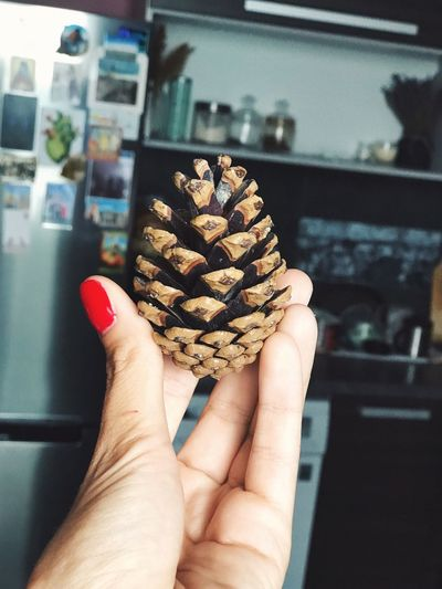 Close-up of hand holding pine cone in kitchen at home