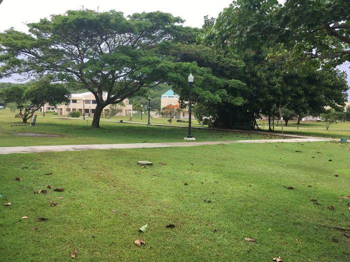 Summer on Campus post rain