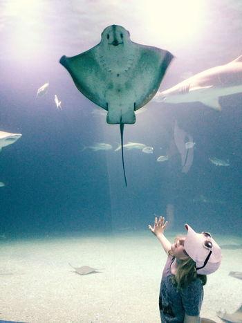Smiley fish 😃 Taking Photos L'oceanografic Valencia, Spain Fujifilm X30 Fujifilm_xseries Fujifilm SPAIN Enjoying Life Beautiful Nature The Great Outdoors - 2016 EyeEm Awards