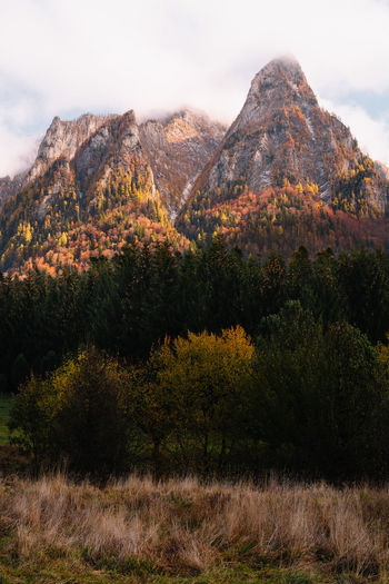 Trees on mountain against sky during autumn
