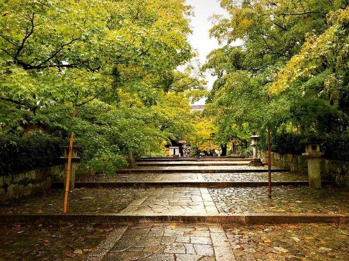 真如堂 Kyoto,japan Tranquility Tranquil Scene Travel Destinations Japan Photography Tree Plant Nature Direction The Way Forward Architecture Growth Built Structure Footpath Shadow