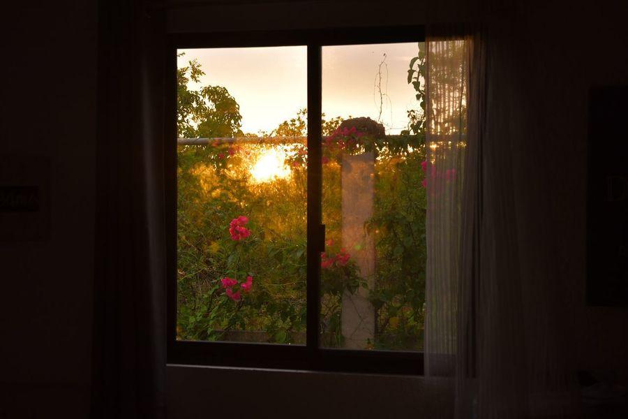Nikon Nikonphotography NikonD7500 Lifeinpanglao Panglao Sunrise Window Plant Glass - Material Transparent Indoors  Sky Nature Sunlight Day