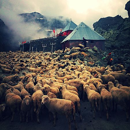 800 sheep too many! 800 Beutiful  Day Domestic Animals Flock Of Sheep Foggy Foggymorning Grazing Landscape Landscape_photography Lesspeople Light Livestock Natural Nature Nature Naturesway Outdoors Sheep Sheeps Sky Structure Travellife Travelling Travelphotography The Great Outdoors - 2017 EyeEm Awards Neighborhood Map