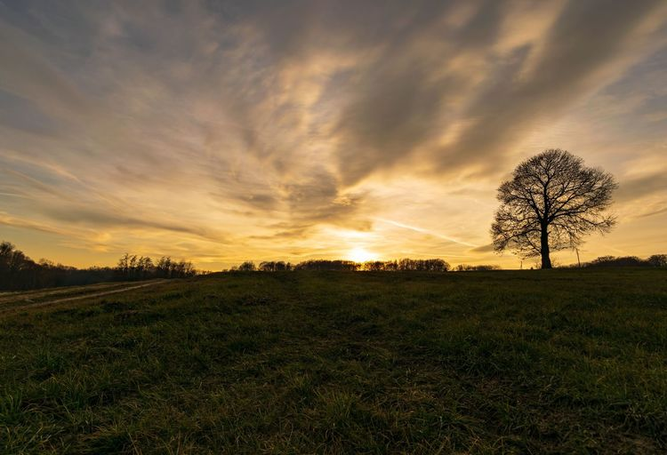 Standing alone. Tree Sunset Field Sky Cloud - Sky Grass Landscape Single Tree Dramatic Sky Atmospheric Mood Cloudscape Silhouette
