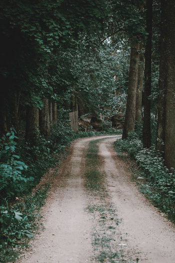 Beauty In Nature Day Diminishing Perspective Direction Dirt Dirt Road Footpath Forest Growth Land Long Nature No People Non-urban Scene Outdoors Plant Road Scenics - Nature The Way Forward Trail Tranquil Scene Tranquility Tree Treelined WoodLand