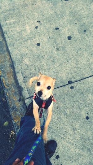 Walk Bamby Dog One Animal Day Dog Lead