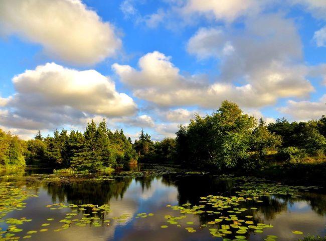 September EyeEm Tadaa Family Denmark Reflection Beauty In Nature Tranquility