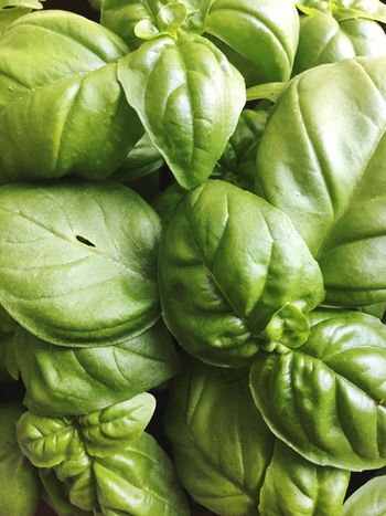 Vegetable Basil Healthy Eating Freshness Food Green Color Close-up Leaf Indoors  Home Garden Home Gardening Home Garden Plants
