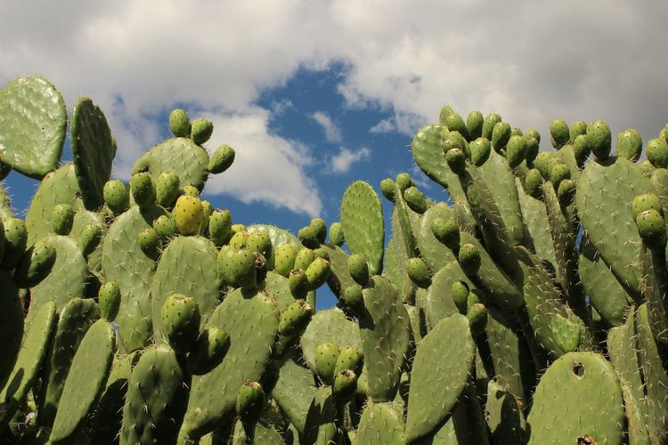 Low Angle View Of Cactus Against Cloudy Sky