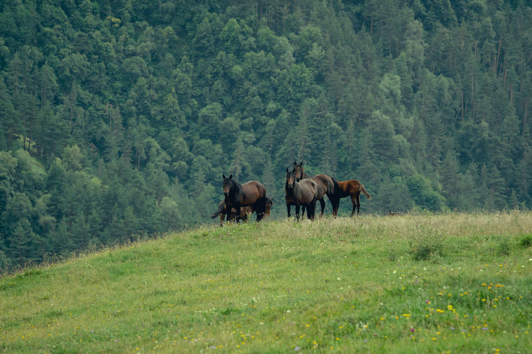 Horses in a forest