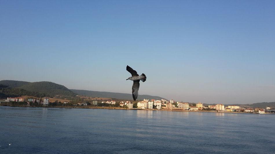 Getting In Touch Freedom Eceabat Seaoflostsouls
