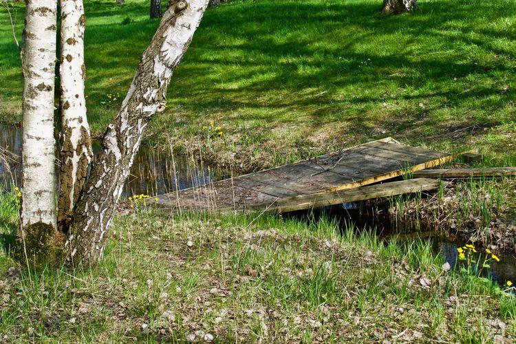 little creek with boardwalk near birches BACH Beauty In Nature Birches Birkenstämme Boardwalk Bächlein Creek Creekside EyeEm Nature Lover Forest GERMANY🇩🇪DEUTSCHERLAND@ Grass Green Color Growth Holzsteg Nature No People Outdoors Tranquility Tree Tree Trunk