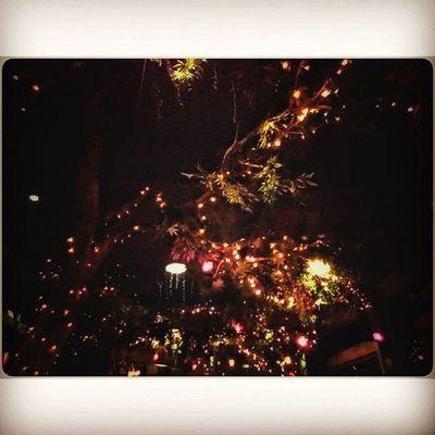 -Merindui Pelangi, Sepungkas Larik Penghujan Lights Lightbulb Lighttree Softlight