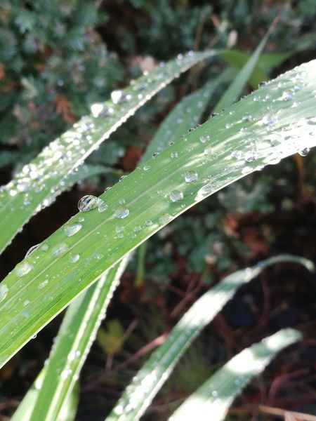 Nature Leaf Close-up No People Outdoors Plant Day Freshness Fragility Water Raindrops After The Rain No People Outdoors