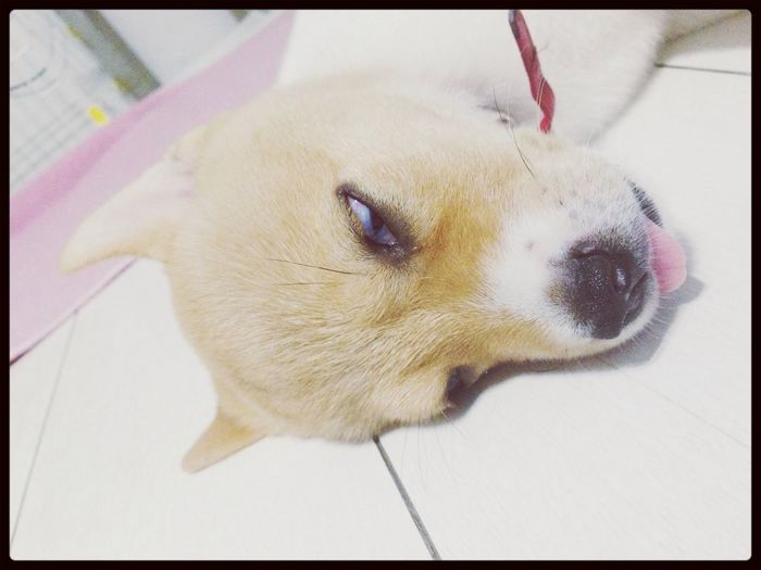 she might be Hounted somebody LOL .....? Dog Sleep