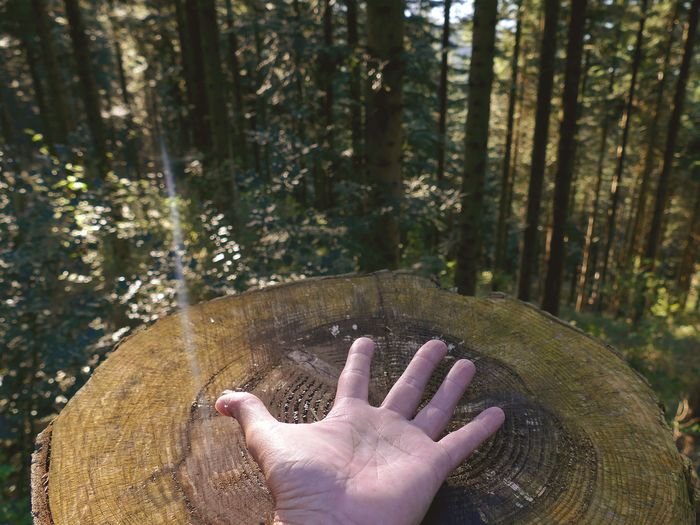 Cropped image of person hand on tree stump in forest