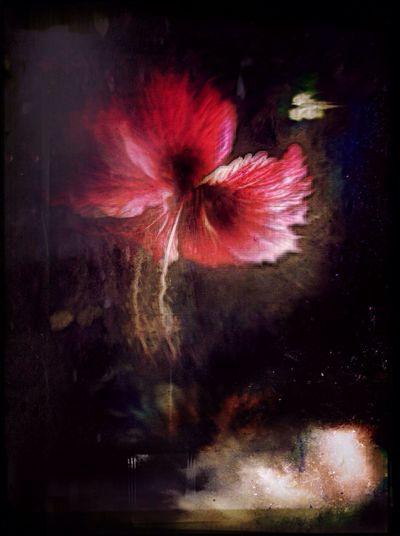 My secret garden 4 NEM Painterly