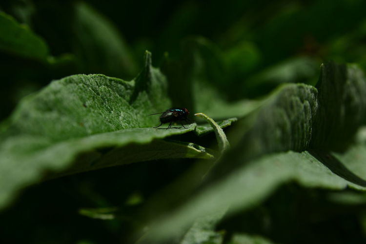Animal Themes Animal Wildlife Animals In The Wild Close-up Green Color Insect Leaf Nature One Animal Outdoors Selective Focus