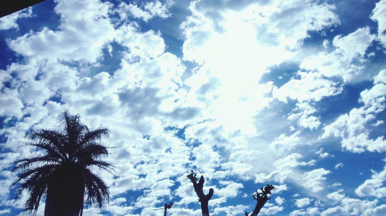 palm tree, sky, cloud - sky, low angle view, nature, outdoors, day, silhouette, beauty in nature, tree, scenics, no people
