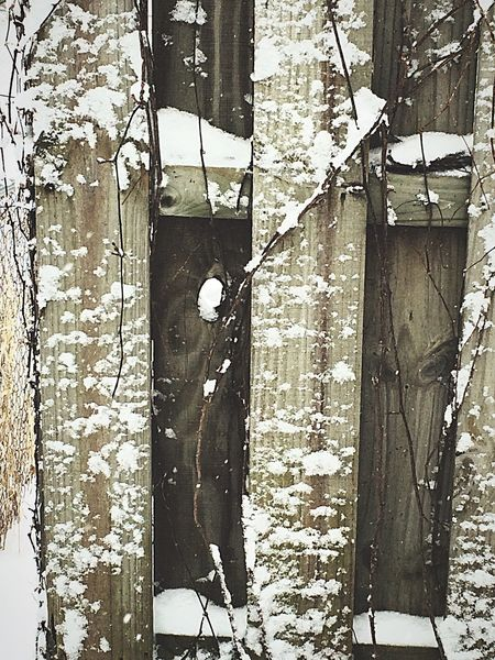 Check This Out Hello World Taking Photos Enjoying Life Photograph February Snow Fence Branches Hole Brisk Naturewalks Winter Wonderland Nature Cold Chili  Burrrr