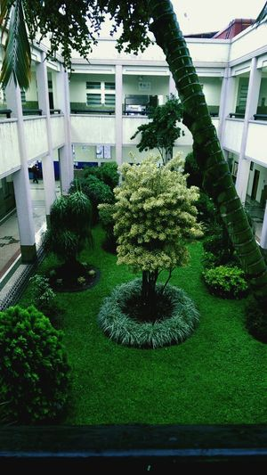 Ucat My World Trees Green