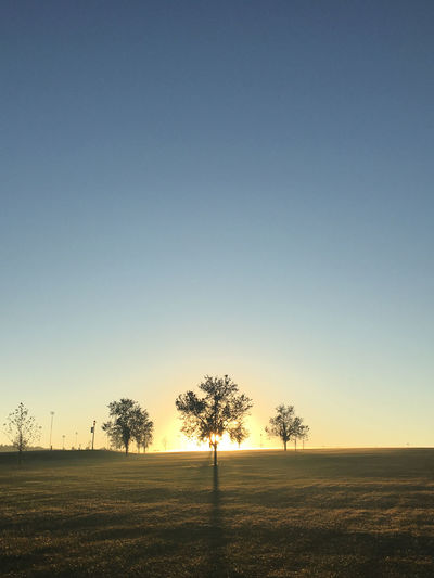 Sunrise behind tree Agriculture Bare Tree Beauty In Nature Blue Clear Sky Day Field Grass Landscape Nature No People Outdoors Rural Scene Scenics Sky Sunset Tranquil Scene Tranquility Tree
