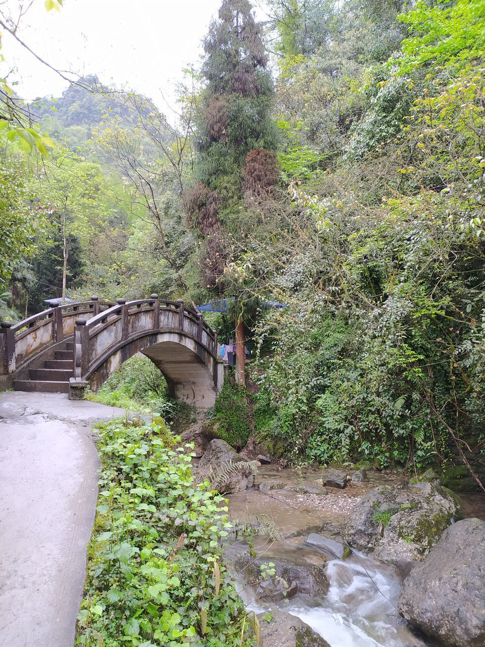 ARCH BRIDGE OVER RIVER STREAM IN FOREST