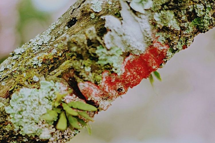 Branch Lichen