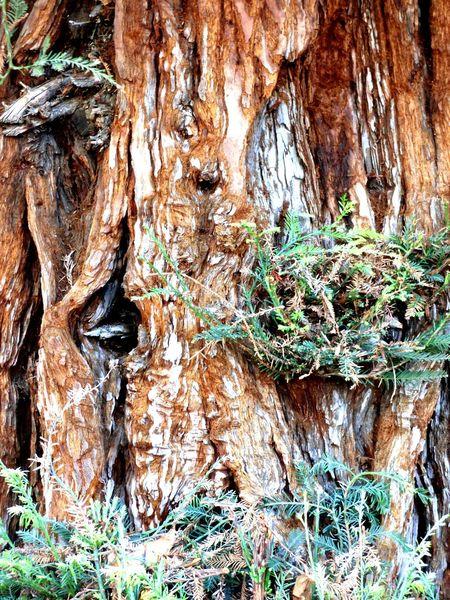 Trees Treebark Up Close And Personal Panasonic Lumix