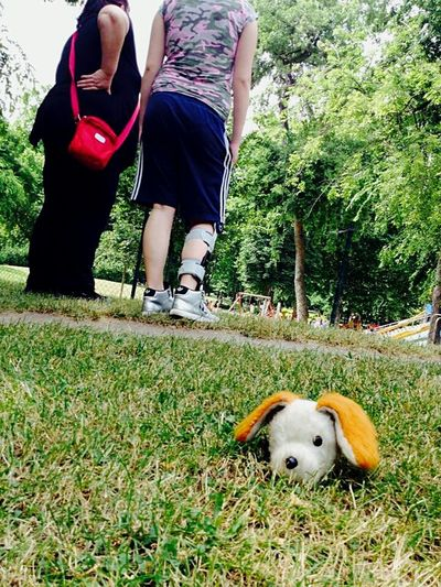 Park One-eyed Dog Toy Injuries Grass Trees Standing Backs
