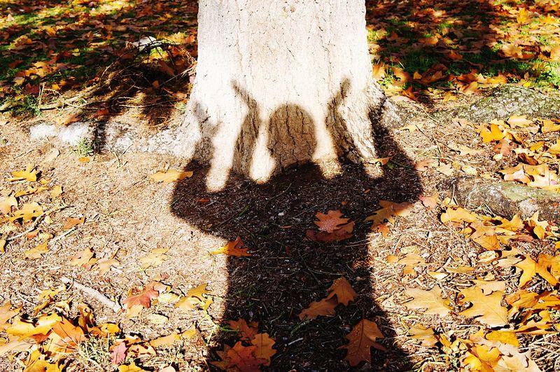 Shadow High