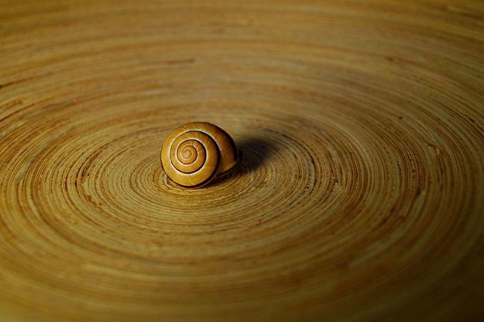 snail on wooden circle Abstract Art Berlin Circle Circles Close-up Photo Art Photography Snail Snails Snailshell Snail🐌 Still Life Wood Wood - Material