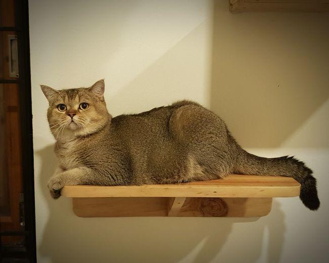 Pets Domestic Cat Sitting Feline Portrait Animal Themes