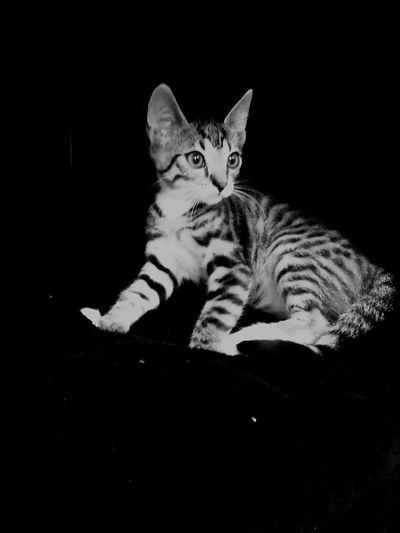 World In My Eyes Enjoying Life MyPhotography Taking Photos MIAcat Goodday✌️ Cat♡