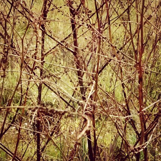 Reeds 9.28