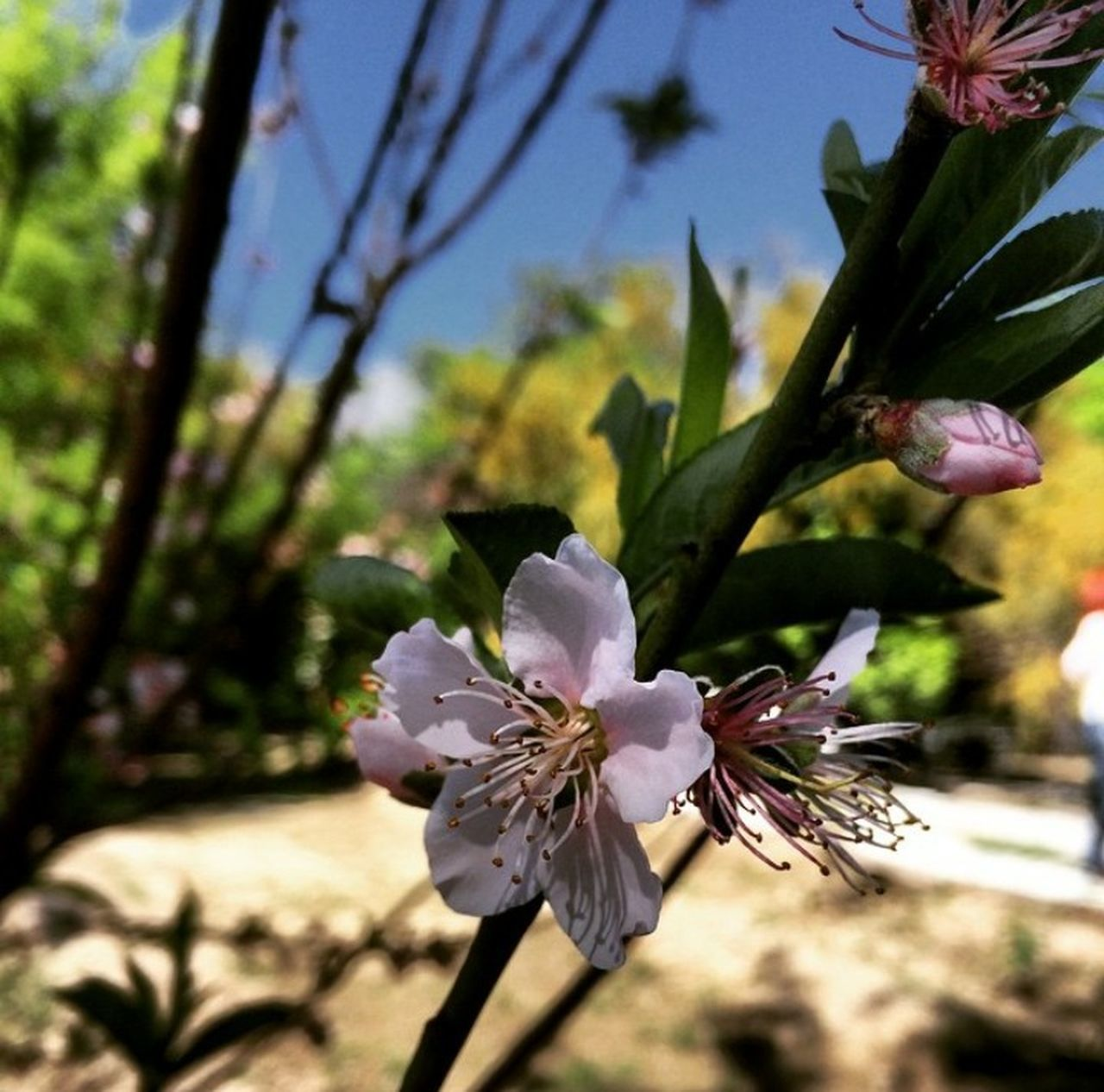 flower, fragility, nature, petal, beauty in nature, growth, flower head, blossom, freshness, botany, no people, springtime, plant, day, blooming, stamen, tree, close-up, branch, outdoors