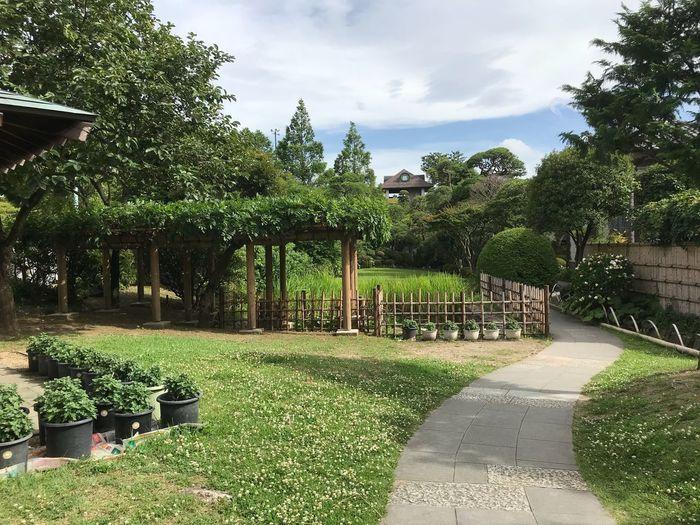 山本邸 裏庭 茶室への道 物見遊山 邸宅の庭 Plant Tree Growth Nature Green Color Sky Park No People Formal Garden Beauty In Nature Grass Garden Outdoors Day