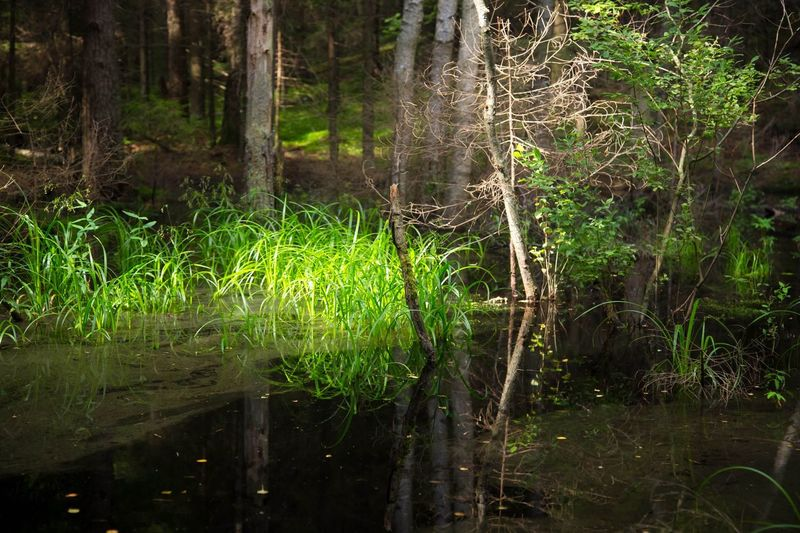 Nature Forest Tree Grass Tranquility Growth Landscape Plant Water Outdoors No People Beauty In Nature Adventure Lush - Description Day Nature Tree Reflection Reflection_collection Reflections In The Water