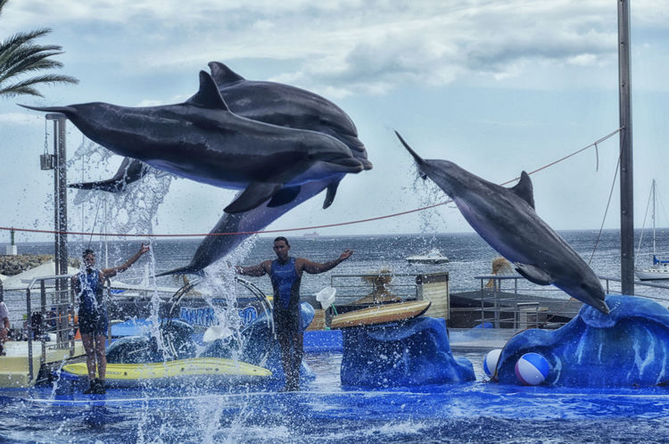 Dolphin Somosfelices Holidays Hanging Out