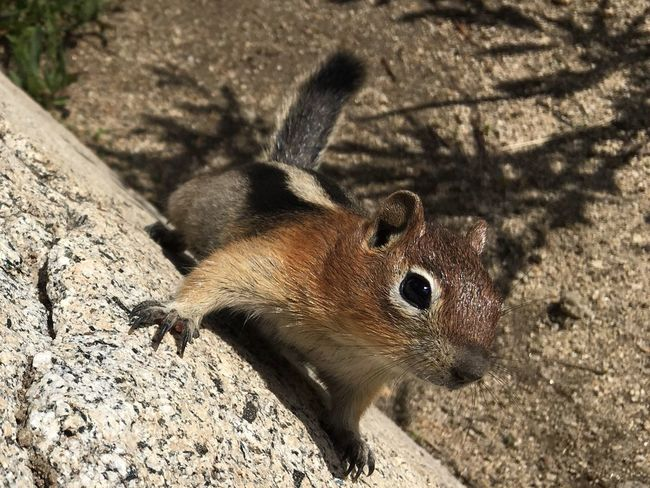 Squirrel EyeEmNewHere Squirrel Photo Squirrel Closeup Squirrel One Animal Animal Themes Animal Wildlife Animals In The Wild Rodent Sunlight Mammal Nature Day Outdoors No People Close-up Shadow Animal Animals In The Wild Nature High Angle View Vertebrate Sunlight Focus On Foreground Chipmunk Land Animal Body Part