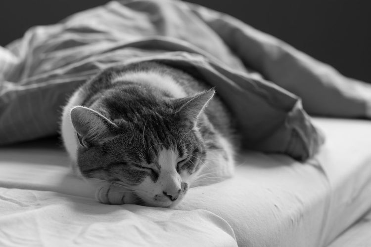 My cat Karin Bed Bedroom Close-up Domestic Cat Indoors  One Animal Pets Relaxation Sleeping
