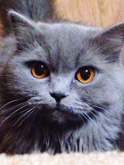 Cat♡ Catsagram I Love My Cat Cat My Cat