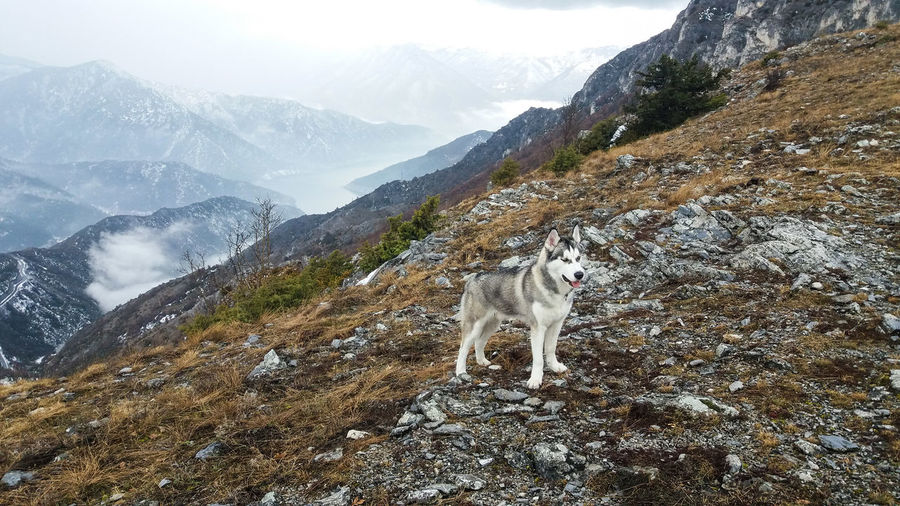 View of dog on mountain