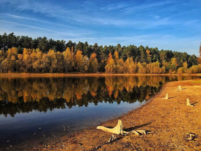 lakeview Autumn colors Autumn Driftwood Lakeshore Lake View Landscape_photography Perfectnature Naturelovers Tree Sky Plant Water Tranquility Reflection Beauty In Nature Lake Scenics - Nature Nature Outdoors Idyllic