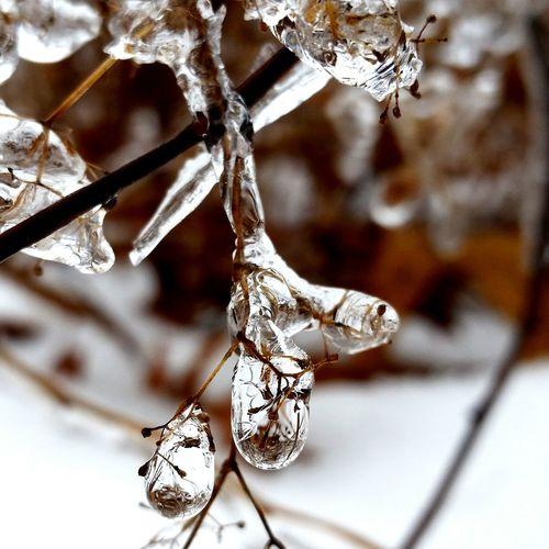 Ice Icedroplets Winter Newengland FrozenDrops Nature Deepfreeze