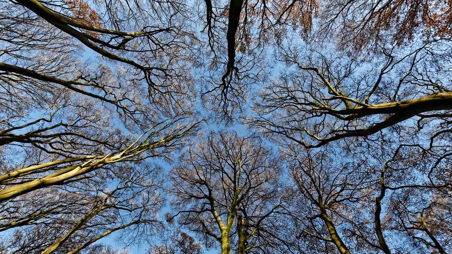 Beech trees near Schillbrok Germany 2016 Beech Trees In November Near Schillbrok Germany Buchen Im November Bei Schillbrok Deutschland Buchenwald Beech Wood Bäume Und Himmel Bäume🌲🌳 Forest Trees And Sky
