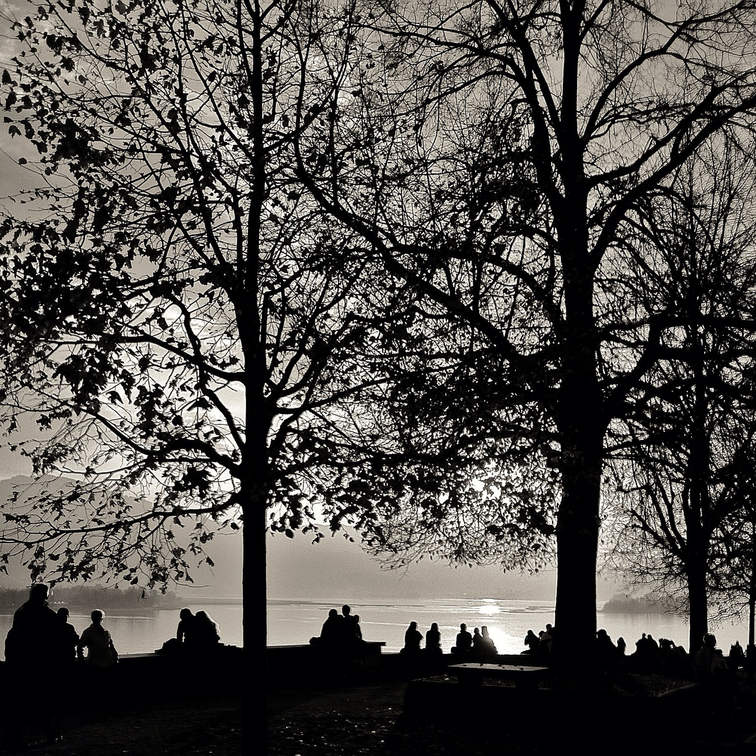 silhouette, tree, bare tree, men, sky, branch, lifestyles, sunset, person, leisure activity, outline, nature, tranquility, togetherness, beauty in nature, dusk, tranquil scene, tree trunk, scenics