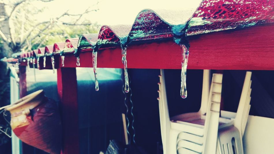 Winter Multi Colored Ice Cold Freeze Freezing Garden Outddoor