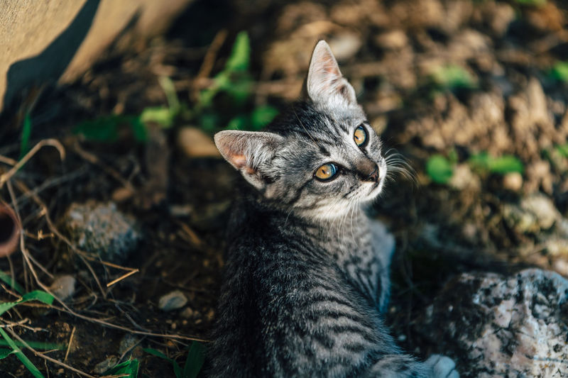 One Animal Animal Themes Animal Pets Feline Domestic Domestic Cat Domestic Animals Mammal Cat Vertebrate Field No People Land Nature Focus On Foreground Looking Day Looking Away Close-up Whisker Animal Head  Animal Eye